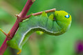 Green worm creep the on branch select focus Royalty Free Stock Photo