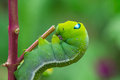 Green worm creep the on branch select focus Stock Photo