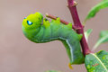 Green worm creep the on branch select focus Royalty Free Stock Photography