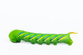 Green worm destroy tree and garden on white background Royalty Free Stock Photos