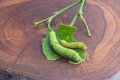 Green worm on wood backgound Royalty Free Stock Photo