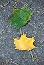 Green and yellow autumn leaves Stock Images