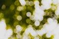 Green and yellow blurry bokeh