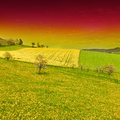 Green and Yellow Fields Royalty Free Stock Photo