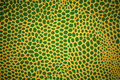 Green and Yellow Lizard Texture Stock Photos