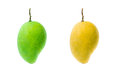 Green and yellow mango fresh sweet Stock Photos
