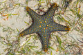 Green and yellow starfish Royalty Free Stock Photo