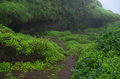 Greenery near caves a beautiful scene of a and rain flowers the cave Stock Photography