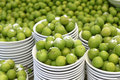 Greengage plum galore plums with salt in stacks of pates Stock Photo