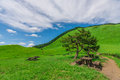 Greengrass at Soni plateau,Nara Prefecture ,Japan Royalty Free Stock Photo