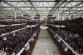 Greenhouse cultivation the new agricultural exhibition planting Royalty Free Stock Image