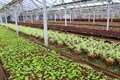 Greenhouse with different species of flowers decorative for home placed in rows in the Stock Photos