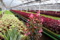 Greenhouse with different species of flowers placed in rows Royalty Free Stock Photo