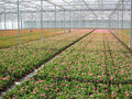 Greenhouse with flowers Royalty Free Stock Images