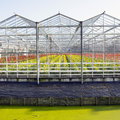 Greenhouse full of blossoming flowers in the netherlands Royalty Free Stock Photo