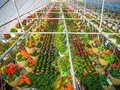 Greenhouse Full of Colorful Flowers Royalty Free Stock Photo