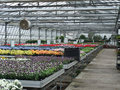 Greenhouse inside a with lots of flowers Stock Images