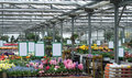 Greenhouse inside a with lots of flowers Royalty Free Stock Photo