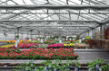 Greenhouse inside a with lots of flowers Royalty Free Stock Image