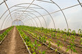 Greenhouse interior inside of a in northern serbia Stock Images