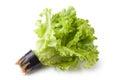 Greenhouse lettuce in a pot Stock Photo