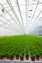 Greenhouse with many Bamboo plants Royalty Free Stock Photo