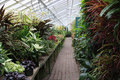 Greenhouse Plants Stock Photography