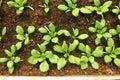 Greenhouse Plants Royalty Free Stock Photos