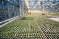 Greenhouse with seedling spring agribusiness Stock Images
