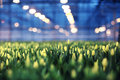Greenhouse with seedling spring agribusiness Royalty Free Stock Photos