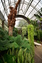 Greenhouse With Tropical Plants