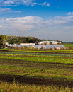 Greenhouses and adjoining fields colorful vegetable field plastic Stock Photo