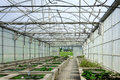 Greenhouses Royalty Free Stock Photo