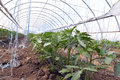 Greenhouses with polyethylene film_5 Royalty Free Stock Photo