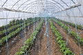 Greenhouses with polyethylene film_7 Royalty Free Stock Photo
