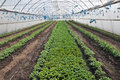 Greenhouses with polyethylene film_9 Royalty Free Stock Photo