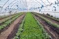 Greenhouses with polyethylene film_12 Royalty Free Stock Photo