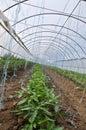 Greenhouses with polyethylene film Royalty Free Stock Photo