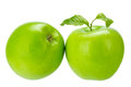 Greening two fresh green apples isolated on the white background Stock Images
