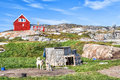 Greenland Dogs resting in Rodebay settlement, Greenland Royalty Free Stock Photo