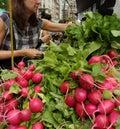 Greenmarket, Union Square, NYC, NY, USA Royalty Free Stock Photo
