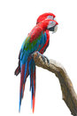 Greenwinged Macaw Royalty Free Stock Image