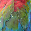 Greenwinged macaw feathers beautiful background of pattern Stock Photos