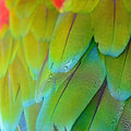 Greenwinged macaw feathers beautiful background of pattern Royalty Free Stock Images