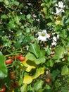 Greeny petals Royalty Free Stock Photo