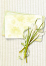 Greeting card with a bouquet of snowdrops in the cozy backgroun Royalty Free Stock Photos