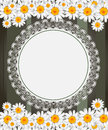 Greeting card with daisies and abstracts backgroun background chamomile flower Royalty Free Stock Photography