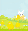 Greeting card with easter bunny and sweet chicks illustration Stock Photos