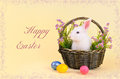 Greeting card happy easter sweet fluffy white bunny basket flowers colored eggs pale yellow background Royalty Free Stock Photo