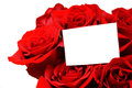 Greeting card with roses Royalty Free Stock Photography